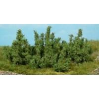 10 buissons 3 cm