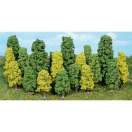 20 Arbres à feuilles 5-15 cm