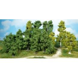 14 Arbres à feuilles 9-18 cm