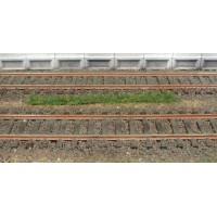 10 bandes d'herbe foncée de 5-6 mm / 10 cm  . Héki