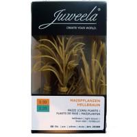 50 Pieds de Mais Grain . Juweela