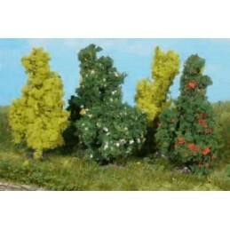 5 Arbustes de 6 cm
