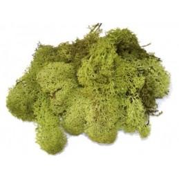 Sachet de 75 gr de Buissons Verts Heki