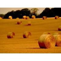 Fourrages et Grains